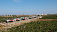 Intercity da Bari Centrale a Roma Termini, qui in veloce transito tra gli uliveti di Barletta, affidato alla E401 009.