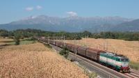 Lungo i campi coltivati a mais, poco prima della stazione di Tricesimo-San Pelagio, la E655 045 è titolare di un merci di carri H in discesa dall